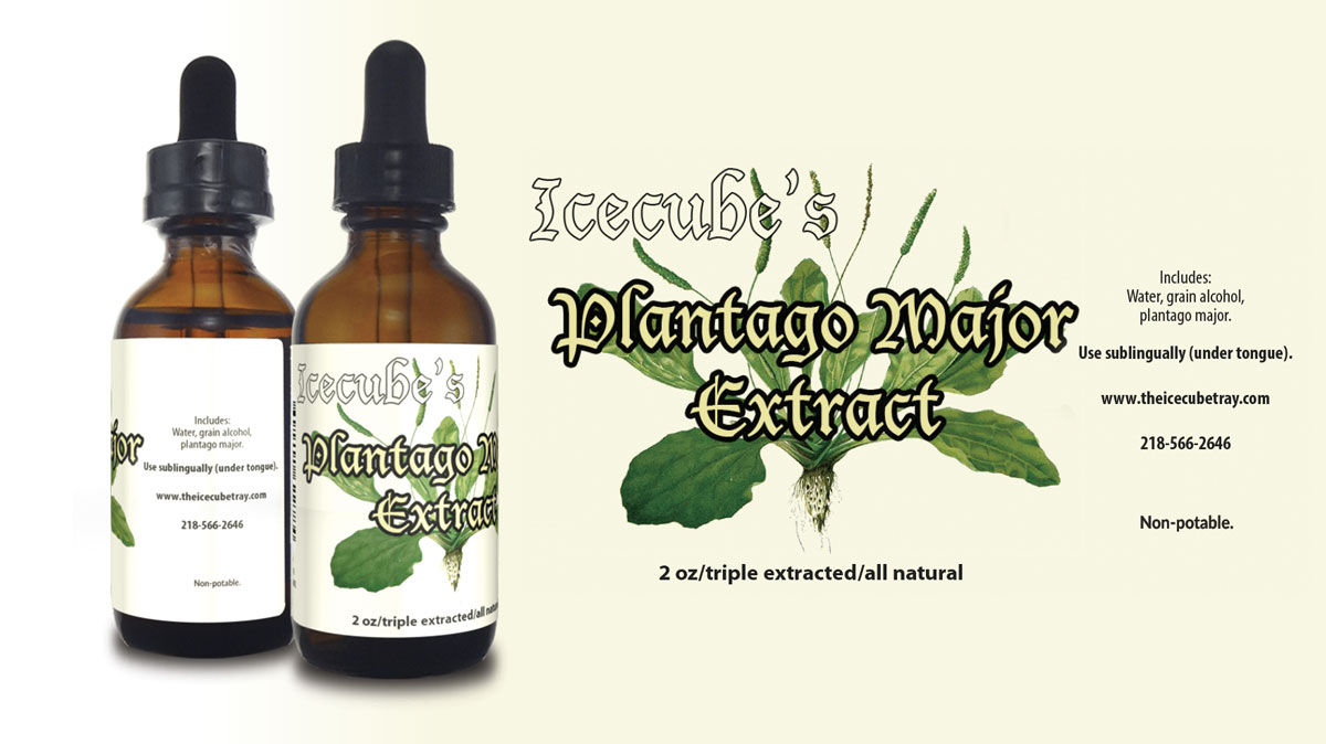 plantago tincture, natural medicine